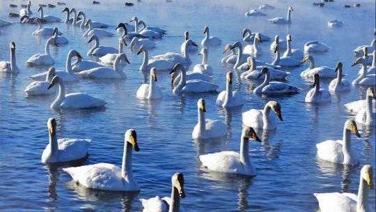 Поездка на Лебединое озеро - фото 2