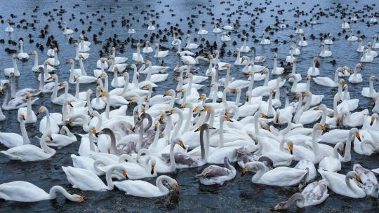 Поездка на Лебединое озеро - фото 3