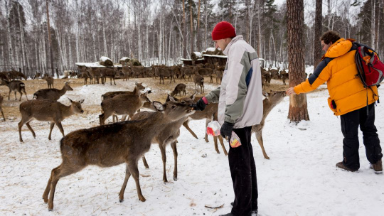Экскурсия Новогодняя история в краю пятнистых оленей