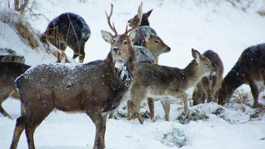 Новогодняя история в краю пятнистых оленей - фото 2