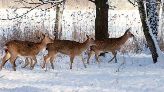 Новогодняя история в краю пятнистых оленей - фото 3