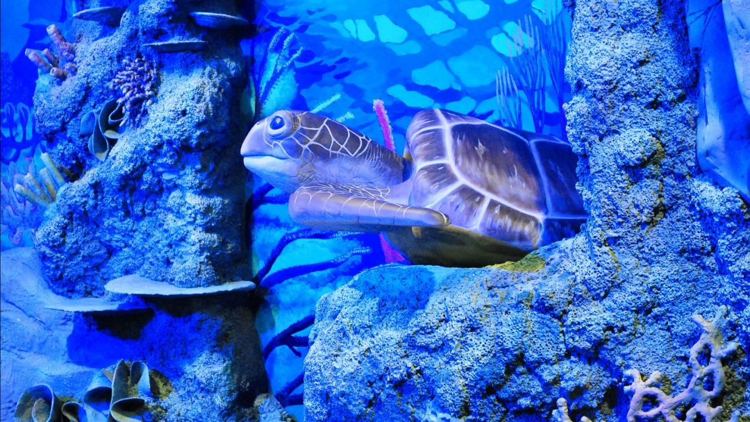 Воронежский океанариум - фото 2