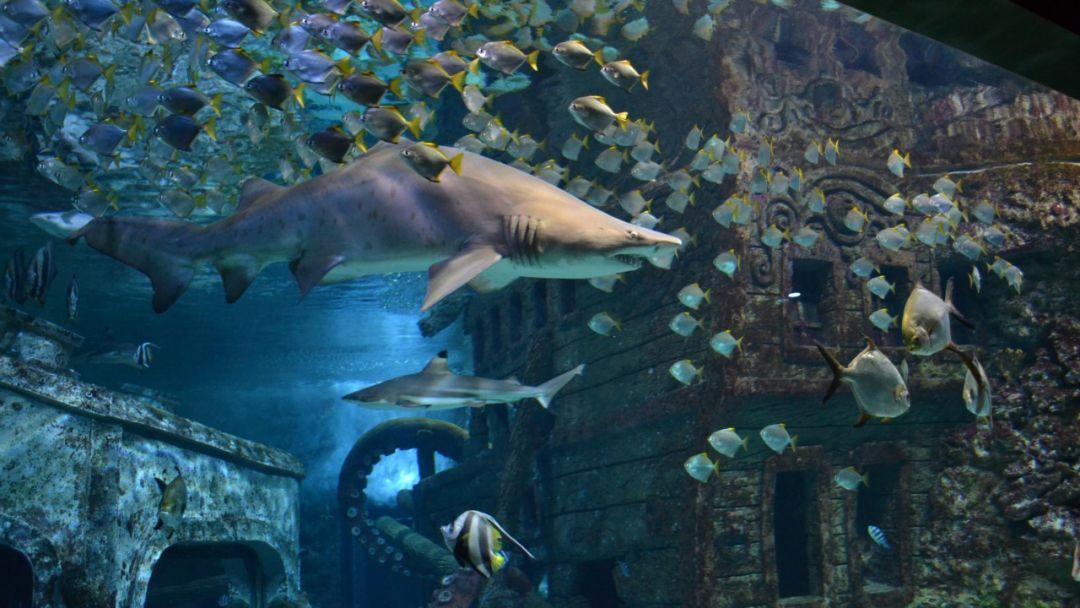 Воронежский океанариум - фото 4