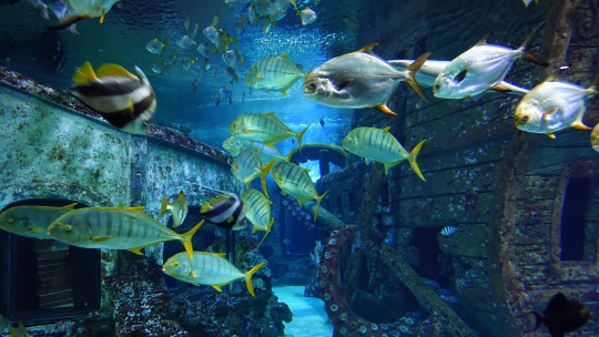 Воронежский океанариум - фото 9