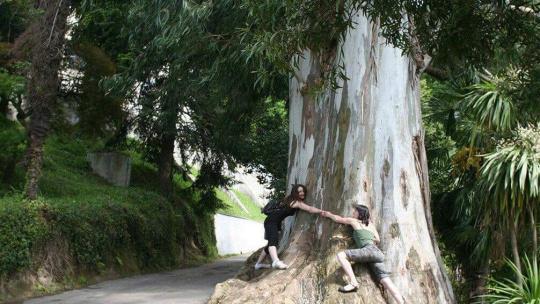 Экскурсия Национальный парк Мтирала  по Батуми