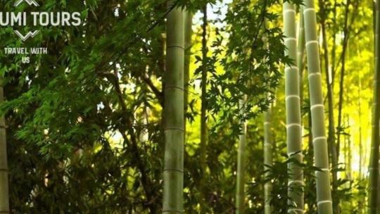 Национальный парк Мтирала  - фото 9