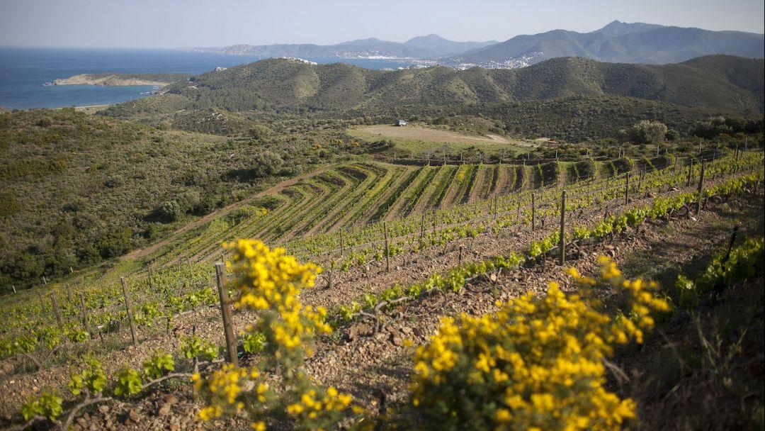 Кадакес и вина Эмпурды - фото 4