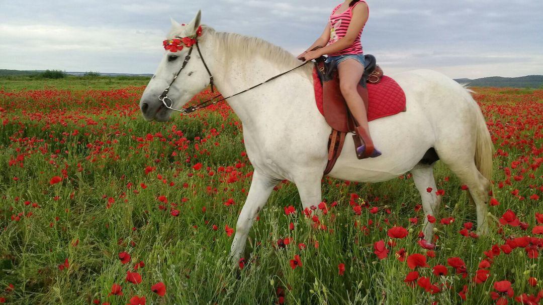 Экскурсия Конные прогулки