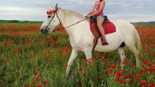 Экскурсия Конные прогулки по Севастополю