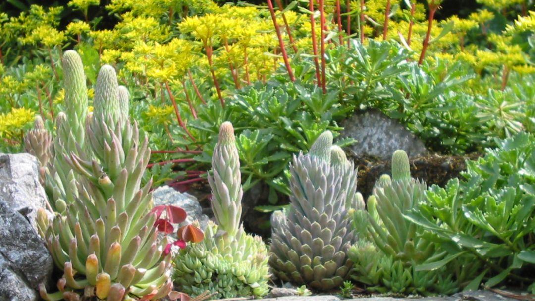 В гости к зубрам и маралам и Ботанический сад - фото 2