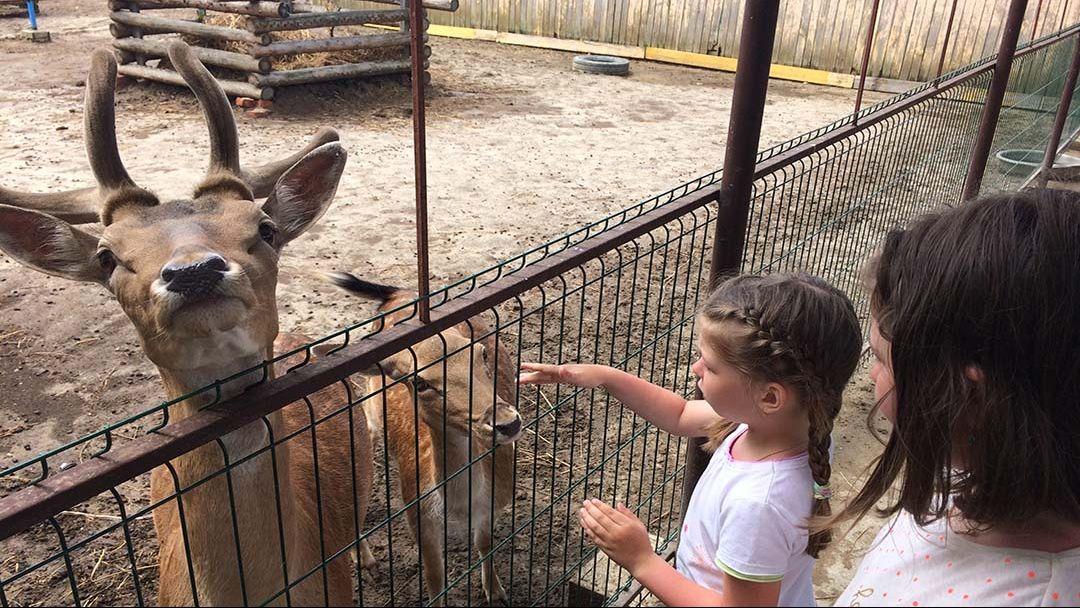 """Контактный зоопарк """"Усадьба"""" - фото 10"""