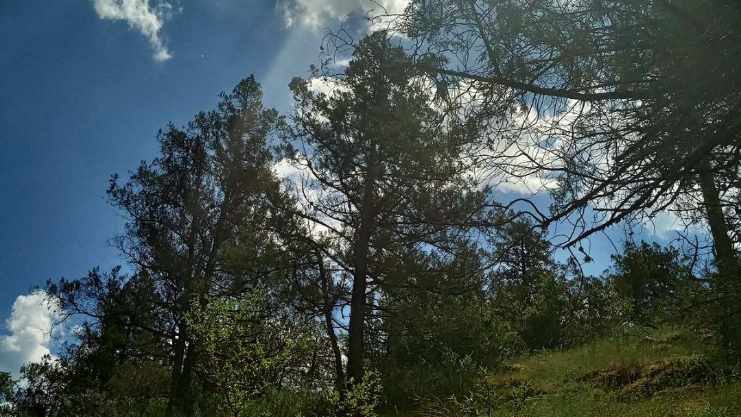 Изумрудный каньон Черной реки - фото 2