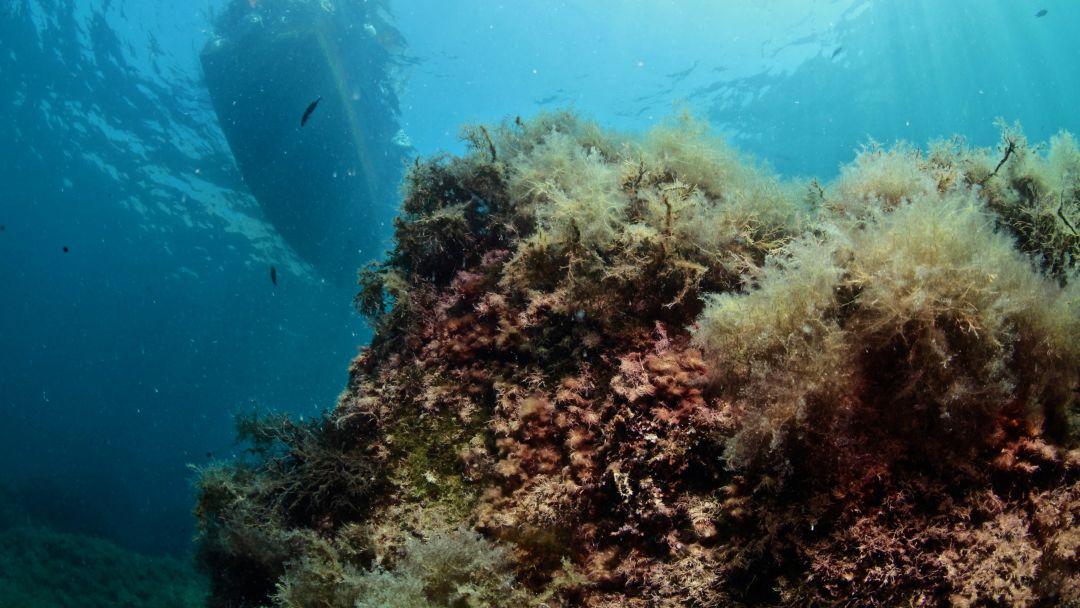 Ознакомительное погружение с аквалангом в Ялте - фото 2