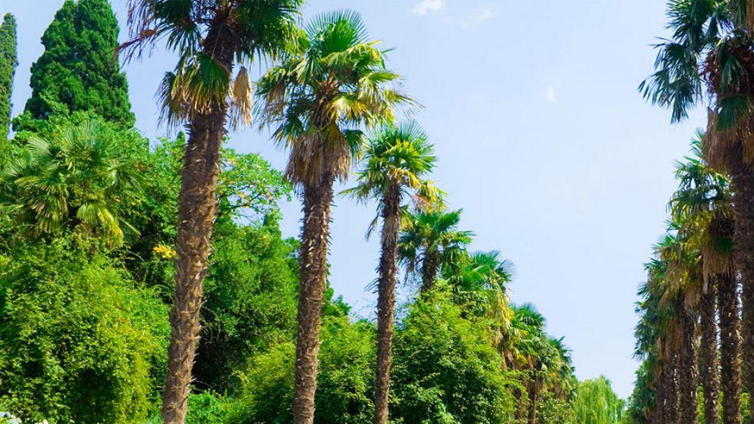 Экскурсия Бал хризантем в Никитском ботаническом саду