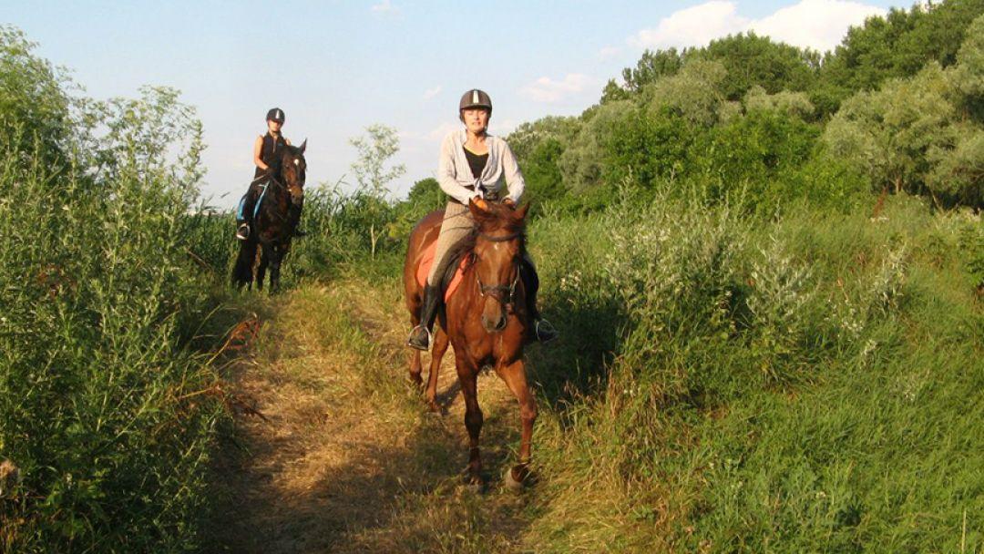 Конные прогулки - фото 3
