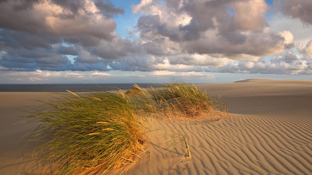 Куршская коса - чудеса на песке - фото 2