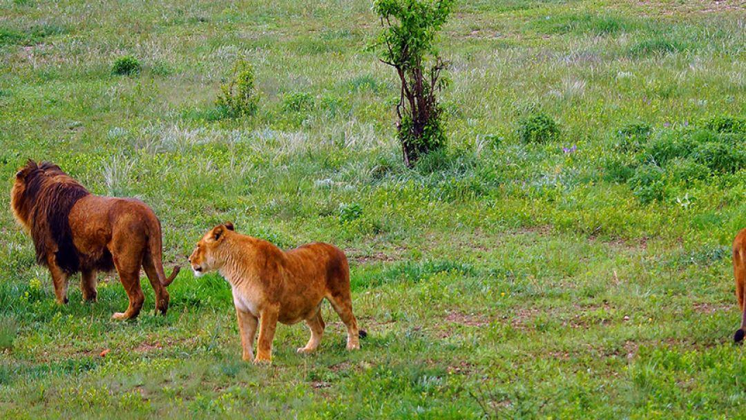 Парк львов -«Тайган» - фото 2