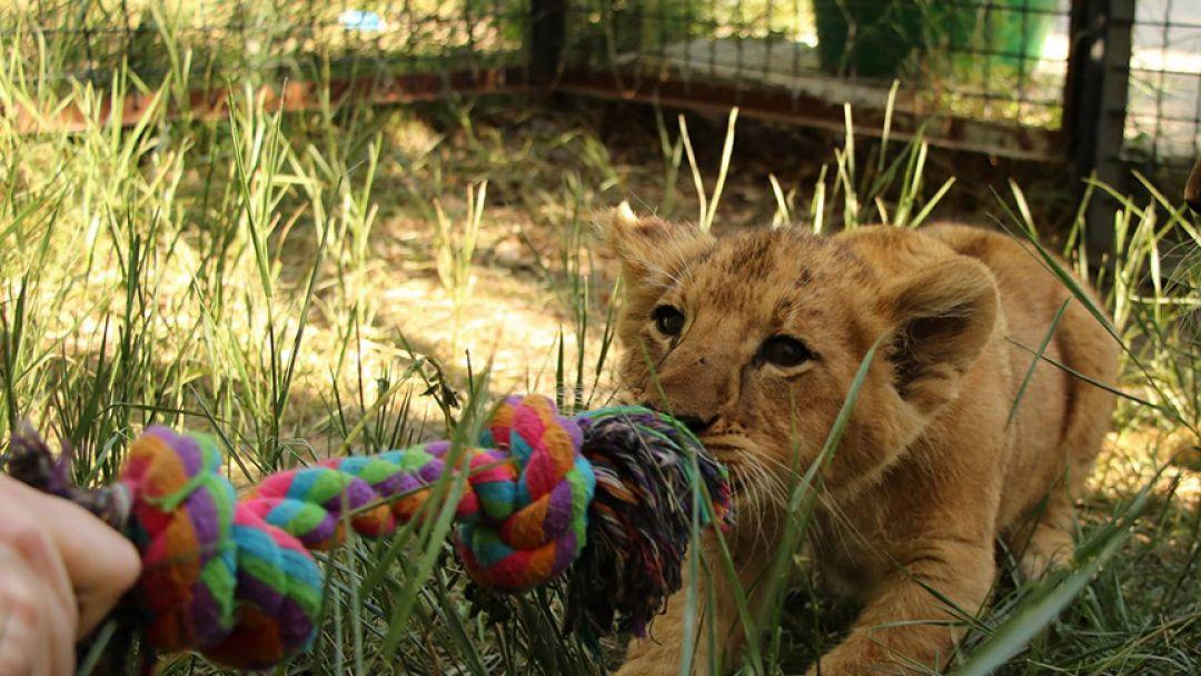 Парк львов -«Тайган» - фото 1