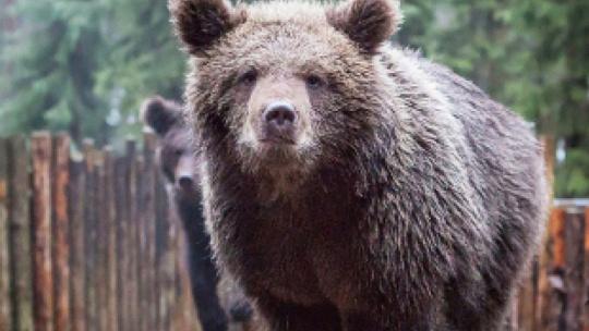 Зоокомплекс Три Медведя в Карелии в Петрозаводске