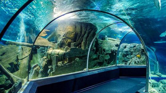 Океанариум Sochi Discovery World Aquarium в Адлере