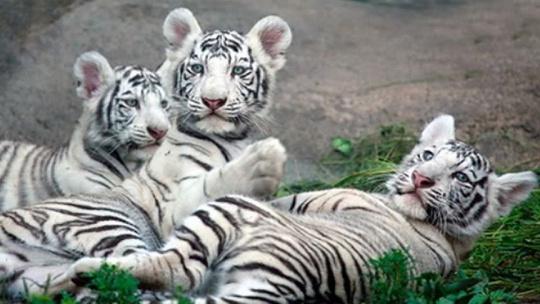 Зоопарк санатория Октябрьский в Сочи в Сочи