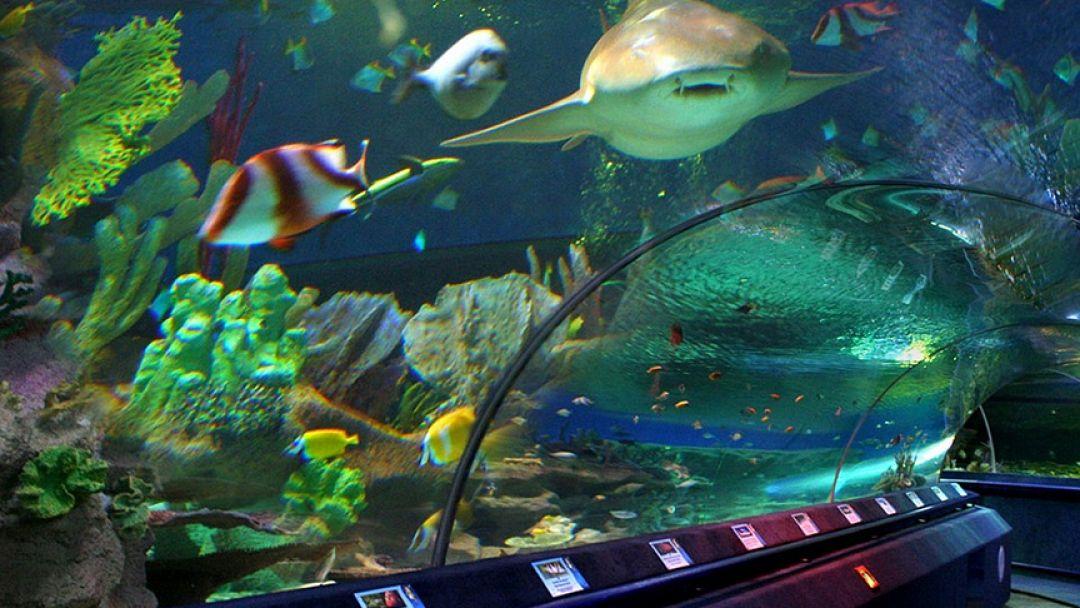 Океанариум в Адлере - фото 3