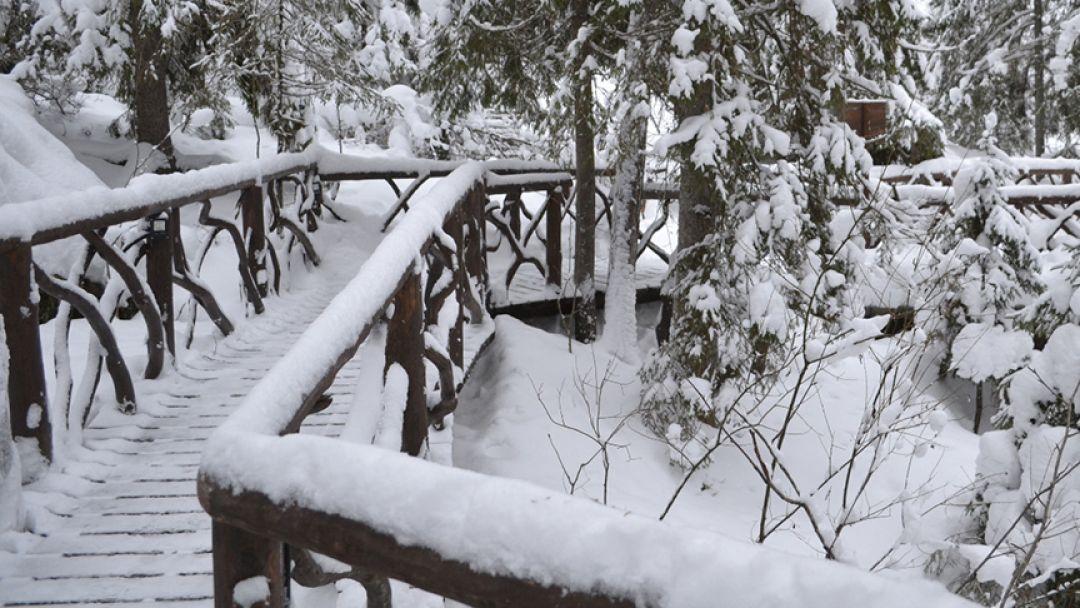 Снежные хаски. Эко-тур, 3 дня/2 ночи - фото 3