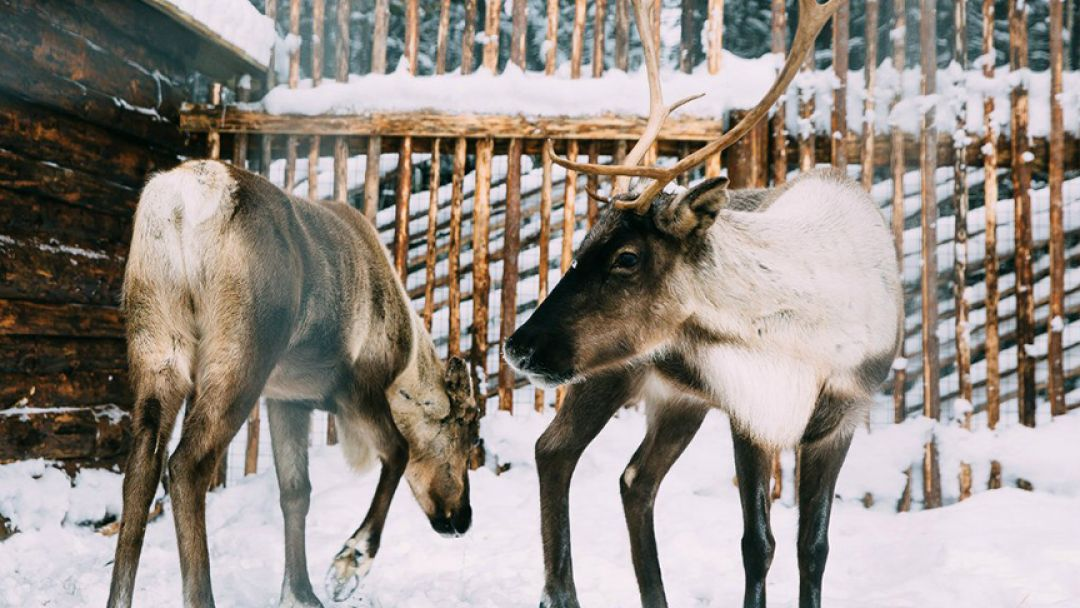 Визит в резиденцию к Talvi Ukko - фото 3