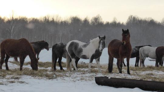 Экскурсия Уральские прогулки (зима), тур на 5 дней по Уфе