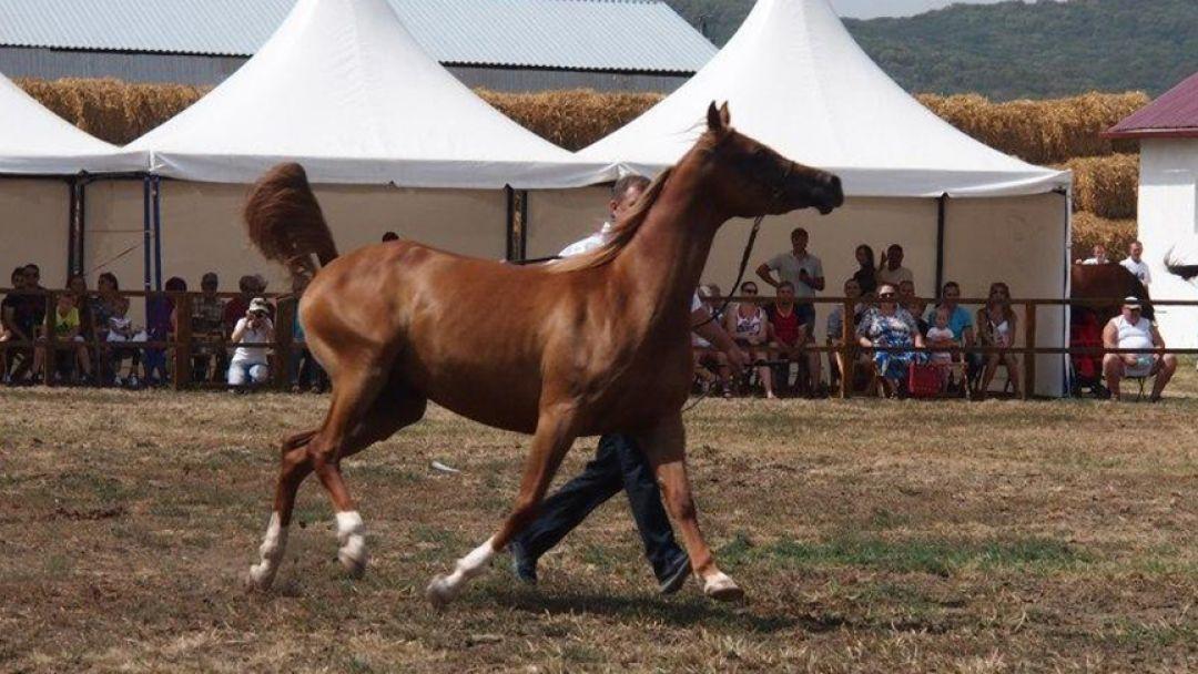 Терский племенной конный завод - фото 2