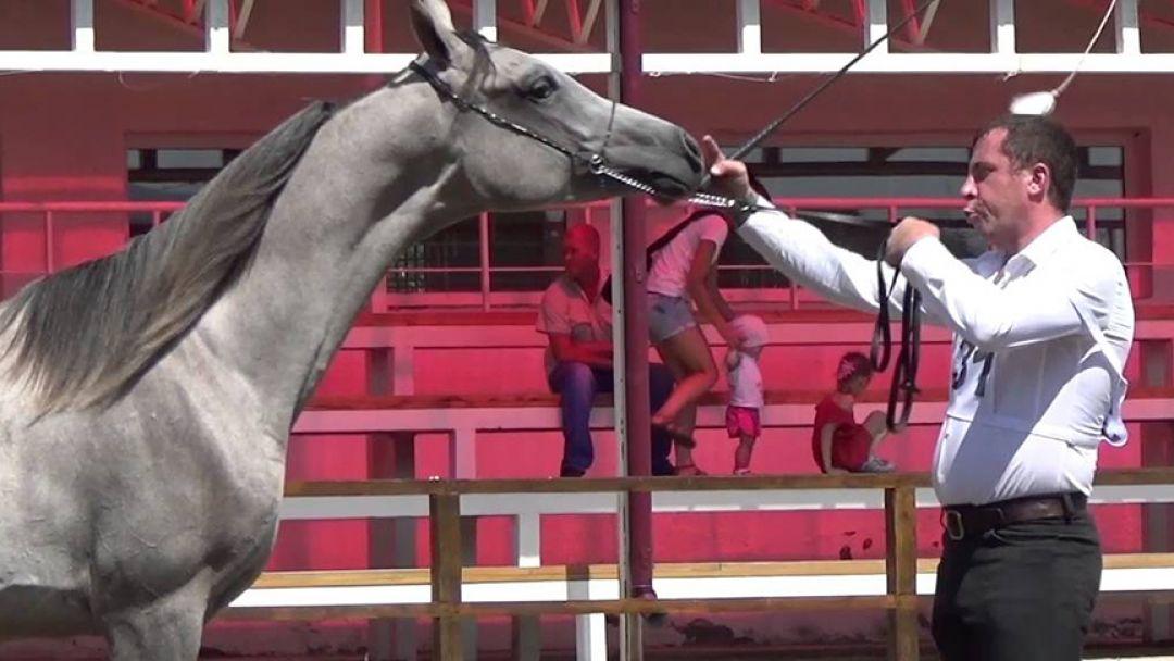 Терский племенной конный завод - фото 3