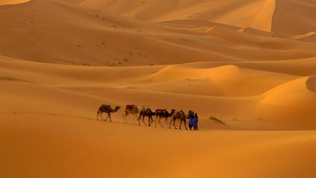 Все развлечения Аравийской пустыни  в Дубай