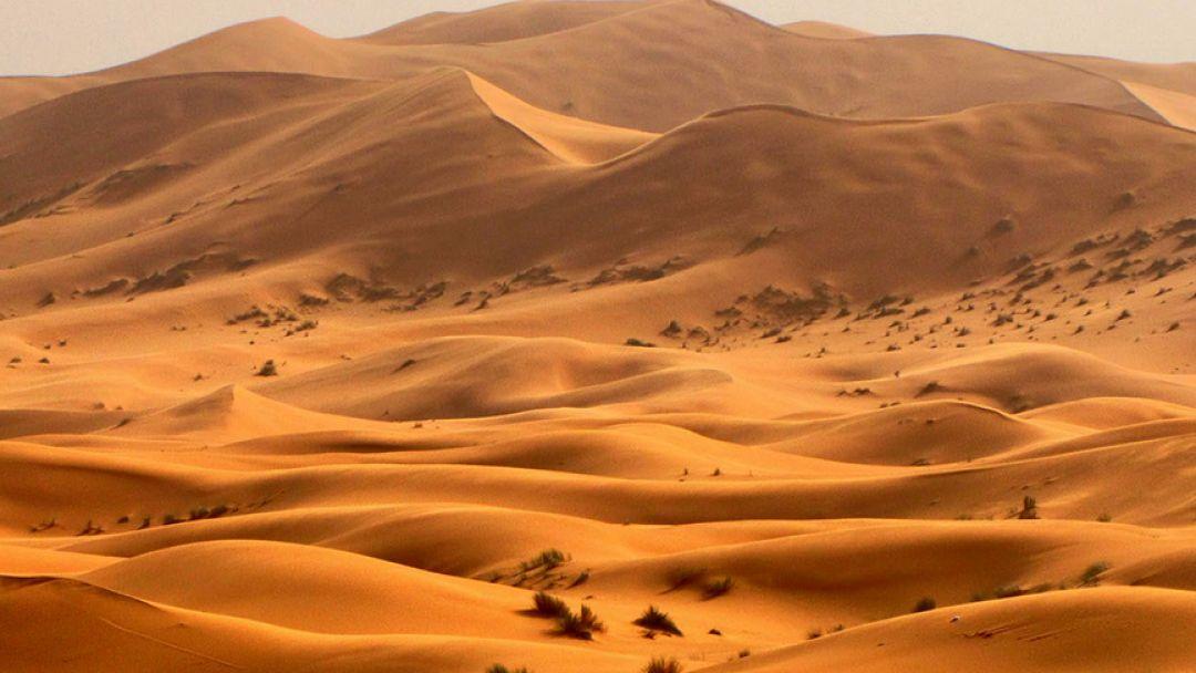 Все развлечения Аравийской пустыни  - фото 2