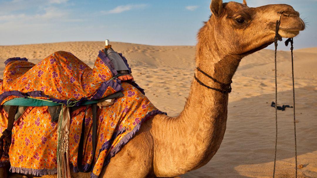 Все развлечения Аравийской пустыни  - фото 3