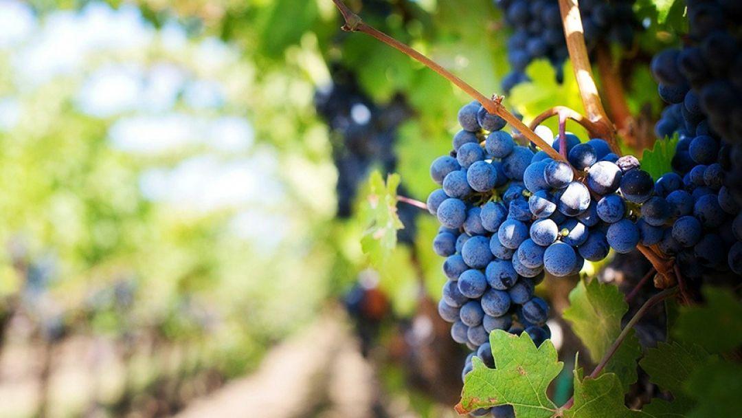 Монтсеррат и винодельни региона Пенедес в Барселоне
