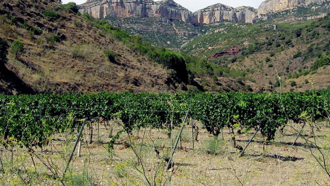 Монтсеррат и винодельни региона Пенедес - фото 2
