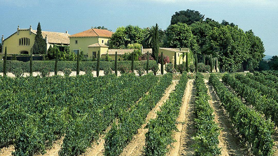 Винодельни Торрес - фото 2
