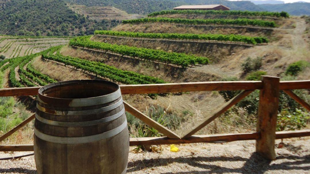 Винодельни Торрес - фото 3