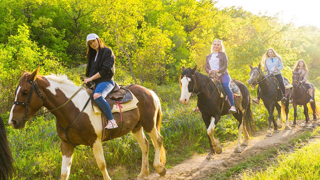 Фотосессия с лошадьми - фото 2