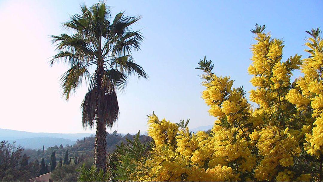 Неизведанная Абхазия + цветение мимозы, тур на 2 дня - фото 3