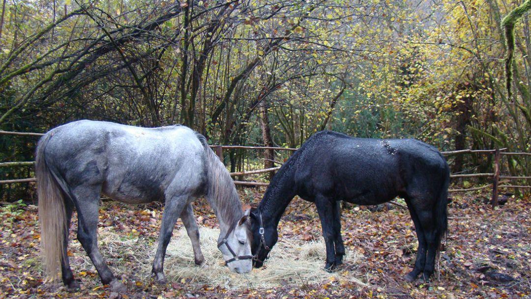 """На лошадях """"В Ущелье ведьм"""" - фото 1"""