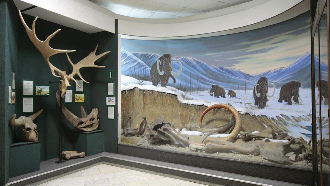 Музей Природы - фото 3