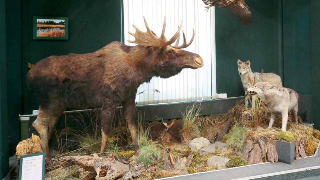 Музей флоры, фауны и земли - фото 1