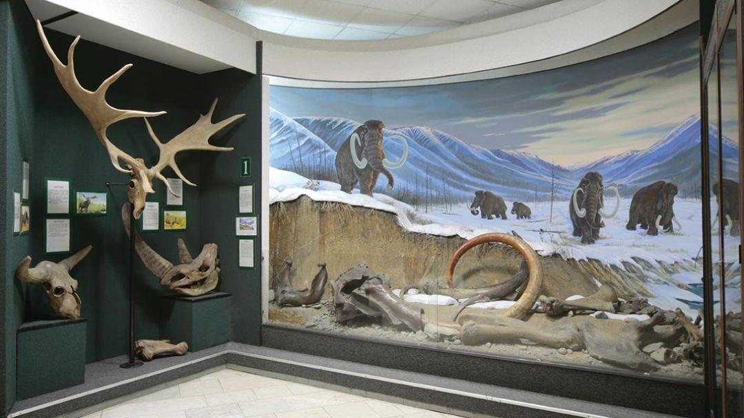 Музей флоры, фауны и земли - фото 2