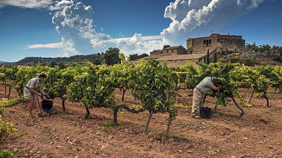 Горный монастырь Монсерат с посещением винодельни семьи TORRES в Барселоне