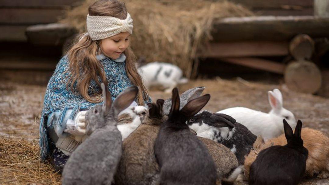 Экскурсия на ферму домашних животных в Санкт-Петербурге
