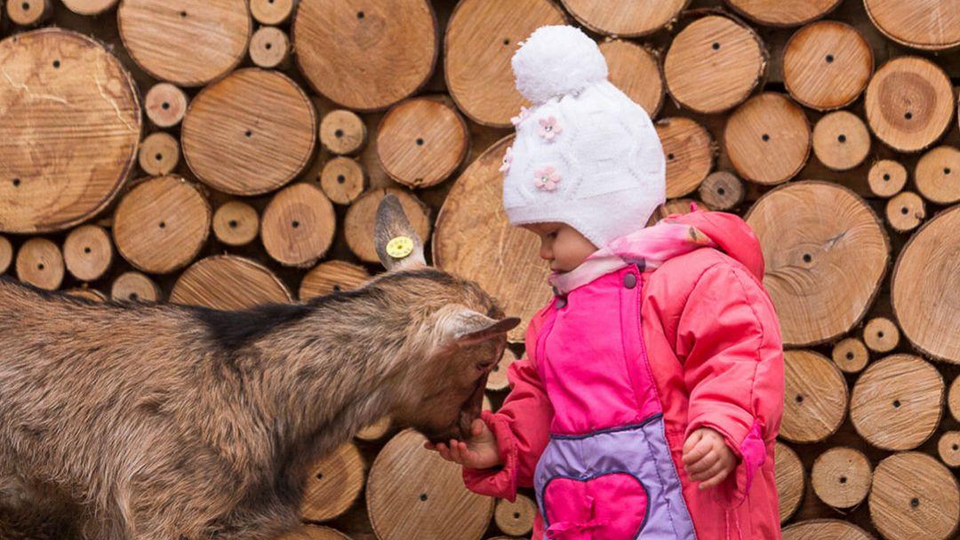 Экскурсия на ферму домашних животных - фото 3