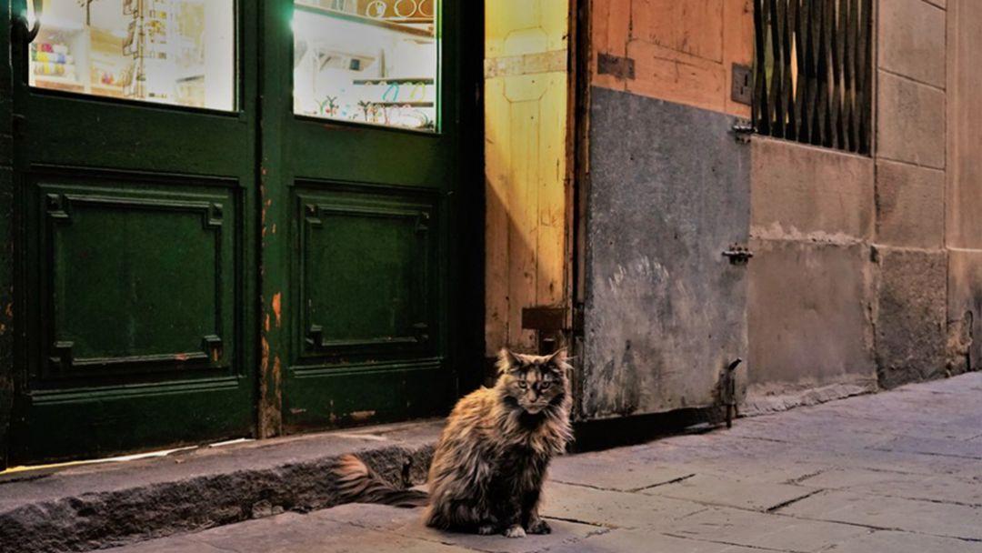 Тайны Барселонских стен  - фото 1