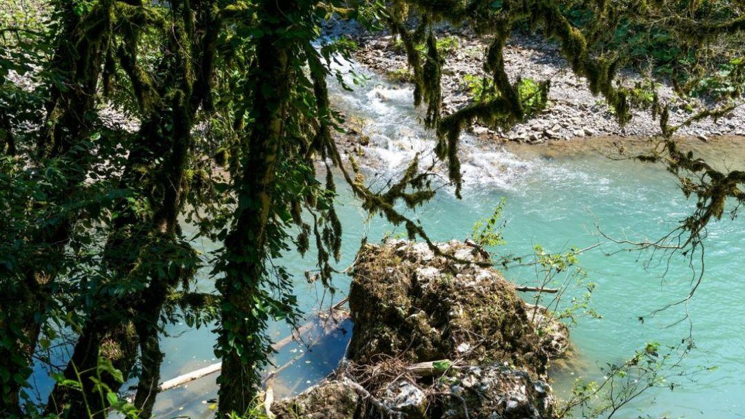 Тисо-самшитовая роща – гора Ахун в Сочи