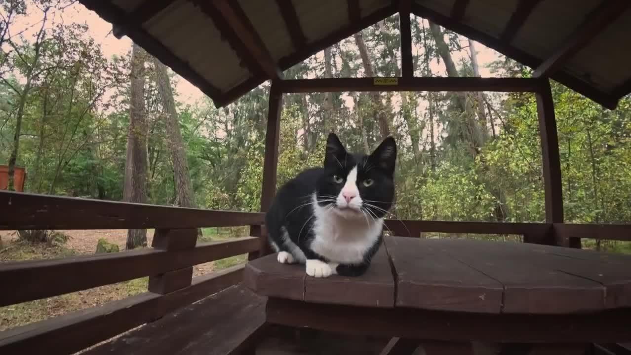 Уютное путешествие на Куршскую косу в мини-группе - видео 1